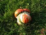 Еще грибы ;)